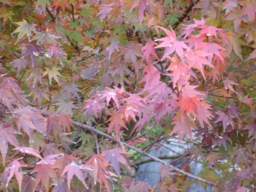 Shirotori Garden - 22