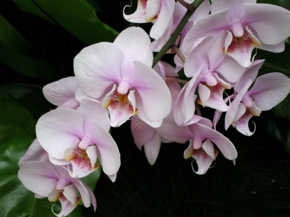 Orchids @ Phipps