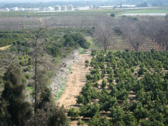 Emek Hefer, the most fertile valley in Israel.